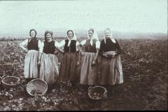 Feldarbeit (Salzburger, 1920er vermutlich)