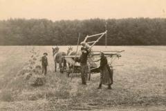 Feldarbeit bei Schechstetten